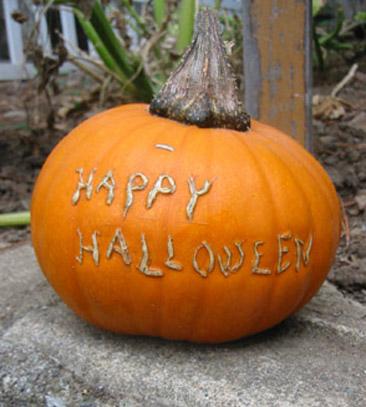 scarification pumpkin