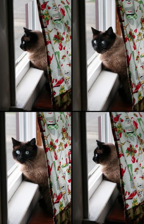 ghost cat window